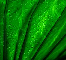 back lit green palm leaf by srphotos