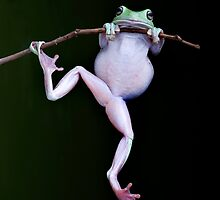 Acrobat by Frank Yuwono