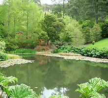 Mt Lofty botanical garden S.A  by wildrider58
