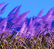 Purple Canefields of Home by D. D.AMO