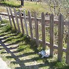Fence in Katoomba, Blue Mountains, Australia by Amy Hing-Young