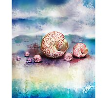 sea shells Photographic Print