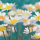 Field of Daisies by saleire