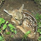 Little Fawn by Ray Rozelle