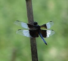 Dragonfly by the house by inventor