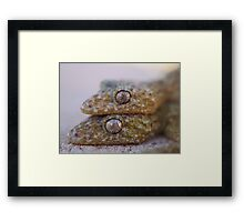 Broad Tailed Gecko Australia Framed Print