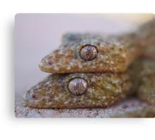 Broad Tailed Gecko Australia Canvas Print