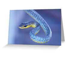 Blue - Green Tree Snake Greeting Card