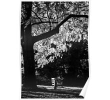 Monochrome Bench Under the Tree Poster