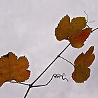 Wild Grape Leaves by John Butler