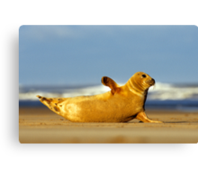 Seal Canvas Print