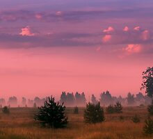Break in the Grassland by Antanas