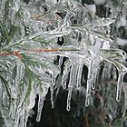 Ice storm  by Susan Pettrone