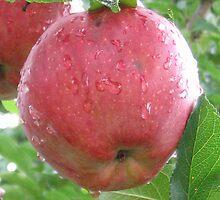 Apple beauty by Susan Pettrone