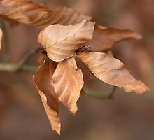 Autumn Leaves by Robert Carr
