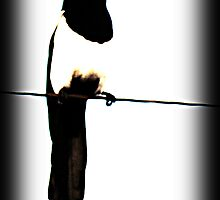 Magpie on a Wire by Ryan Houston