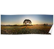 Morning on narcissus field 2 Poster