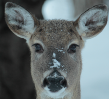 Winter deer in the snow and frost. Sticker