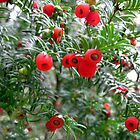Yew Tree by itchingink
