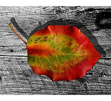 Leaf on Barnwood Photographic Print