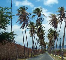 The Avenue of the Coconut Palm by born2serve