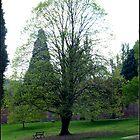 Transparant tree by Stormwolfe