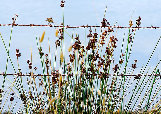 Rusty Weeds by Helen  Page