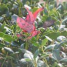 Surprise Leaf by randi1972