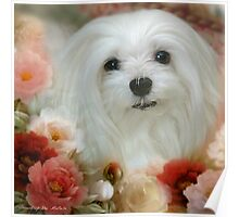 Snowdrop the Maltese - Bright Eyes Poster