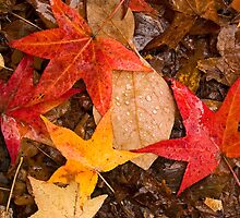 Leaves in Rain by andykazie