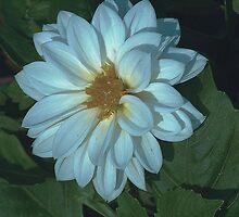 3-layer white by Dennis Rubin IPA