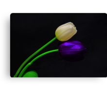 White and Violet Tulip Canvas Print