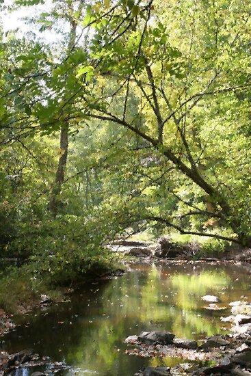 Forest Lagoon by RipleyDigital