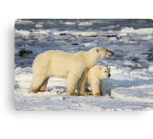 Standing Guard Over Her Cub, Churchill, Canada  Canvas Print