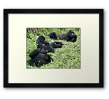 Mountain Gorillas Framed Print