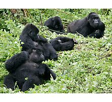 Mountain Gorillas Photographic Print