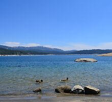 gorgeous and peaceful blue lake, sky, ducks and far away hills. by naturematters