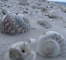 Shell Seeker by Samara  Lee