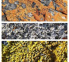 I Lichen This One by Craig Watson