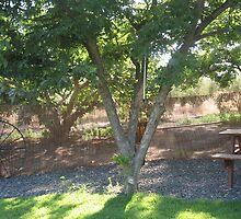 Pecan tree shadow by Sarah  Levinson
