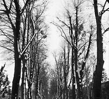 Beneath the Trees by Zeanana