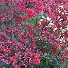 Flowers everywhere by James Gibbs