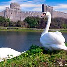 SWANS AT PEMBROKES CASTLE WALES by kfbphoto