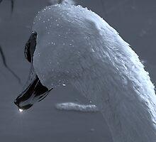 Swan neck 1 by Sharon Perrett