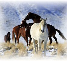 A Horse with No Name by Gene Praag