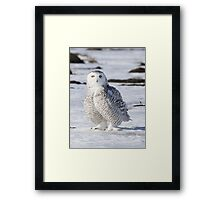 Perfect Plumage Framed Print