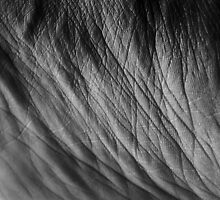 Skin : Geometry In Motion by Laura Marsh