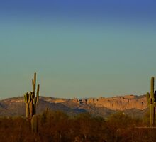 Cactus at Dusk by Charmiene Maxwell-batten
