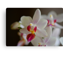 White Orchid Close Canvas Print
