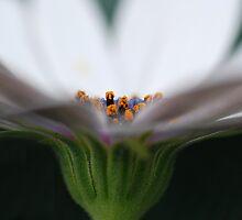 ~ Just a Peek ~ by karenanderson